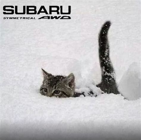 subaru snow meme 116 best subaru images on pinterest lifted subaru