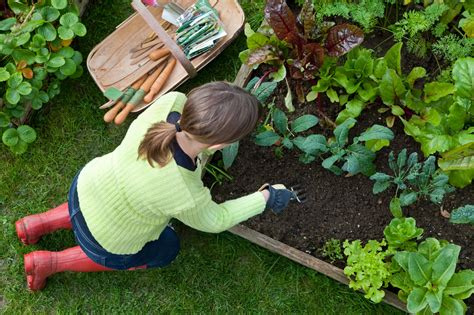 Garden Taste by Ten Tips For Vegetable Gardening During A Drought Green