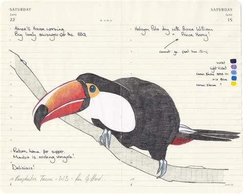 sketsa burung karya fran giffard galeri burung