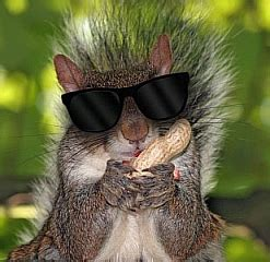 every blind squirrel finds a nut state the blind squirrels at the fcc found
