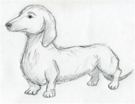 Drawing Dogs by Sketches For Inspiration