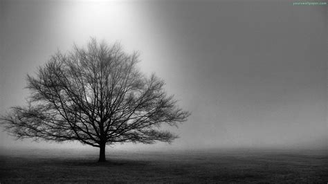 Wallpaper Black And White Trees | black and white images of trees 25 desktop wallpaper