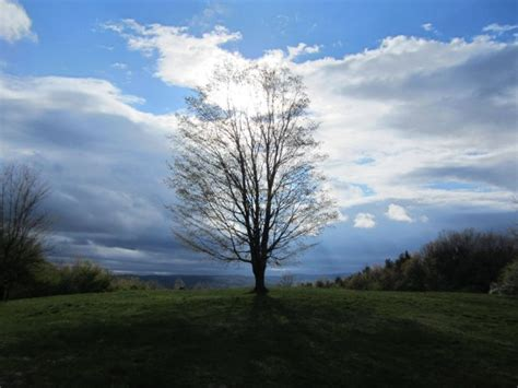 Unedited Landscape Pictures Tree On A Hill Beautiful And Unedited Photorator