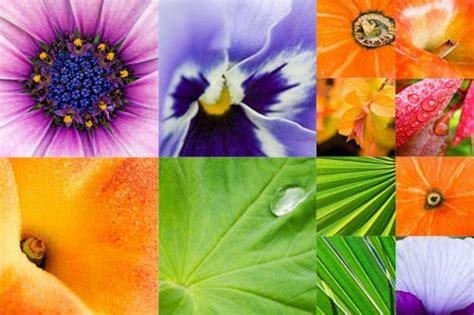 imagenes de flores y frutas banco de im 225 genes para ver disfrutar y compartir