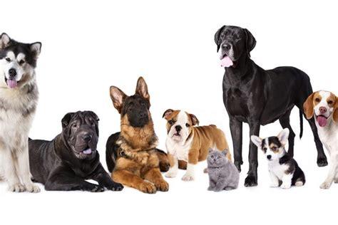 Imagenes Niños Diferentes Razas | las seis razas de perros m 225 s populares de nicaragua