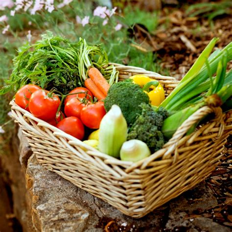 vegetables you can regrow 10 vegetables you can regrow yourself from kitchen scraps