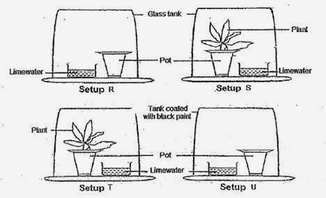design an experiment to determine if plants respire psle science academic coaching respiration and photosynthesis