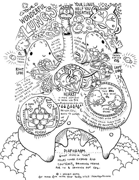 coloring book for biology 25 best ideas about respiratory system on