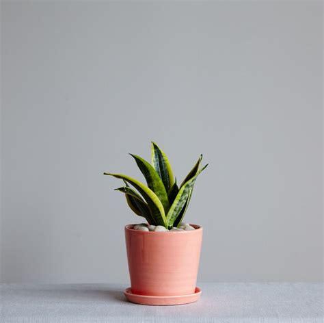 indoor house plants low light best 25 low light houseplants ideas on pinterest indoor
