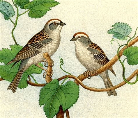 Beautiful Audubon Christmas Cards #6: Birds%2Band%2Bnests%2Bvintage%2Bimage%2Bgraphicsfairy9.jpg
