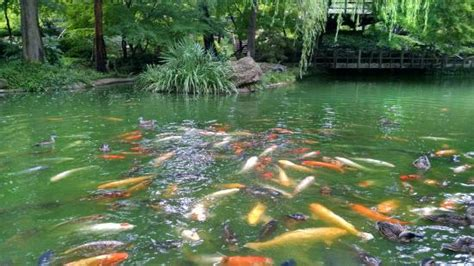 Japanese Botanical Gardens Fort Worth Mid Summer In The Japanese Garden Picture Of Fort Worth Botanic Garden Fort Worth Tripadvisor