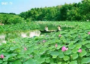 Lotus Pond Ta NgẠN Ngæ VẠä ẠP B 236 Nh Dá ä ẠT Viá T Miá N T 226 Y Nam Bá Ohay Tv