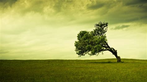 only nature beautiful tree wallpapers hd tree background wallpapers free green trees photos