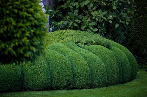 jake hobson japanese cloud pruning specialist topiary