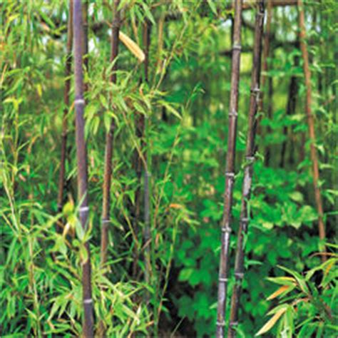How Do I Get Rid Of Bamboo In Backyard by How To Get Rid Of Bamboo