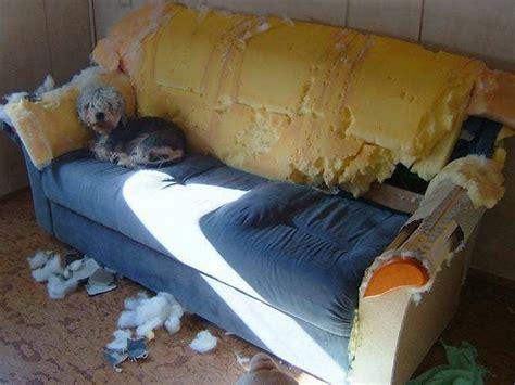 should i let my dog on the sofa dog archives magda s blog