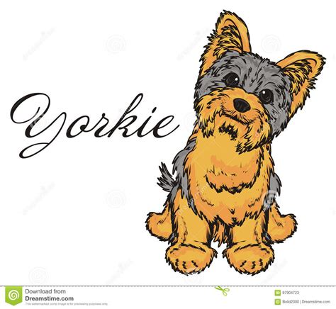 yorkie cartoons illustrations vector stock images