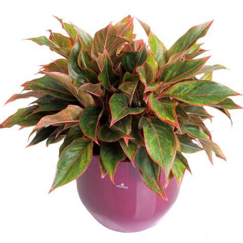 most common flowering house plants common house plants hgtv
