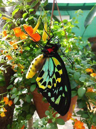 casa delle farfalle montegrotto foto di montegrotto terme foto di montegrotto terme