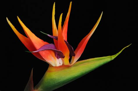jhong hilario haircut fiori esotici nomi fiori esotici gli incontri verdi