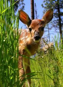 Spring Baby Animals Deer