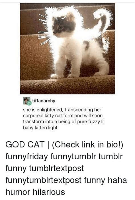 Funny Cat Memes Tumblr - tiffanarchy she is enlightened transcending her corporeal