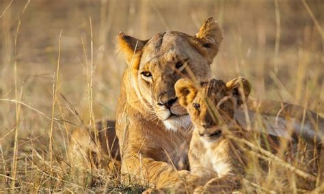 kenya safari tour with airfare from friendly planet travel in lake naivasha groupon getaways