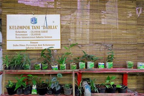 Obat Uban Green Jakarta Barat Kota Jakarta Barat Daerah Khusus Ibukota Jakarta satu harapan kung hijau di jakarta