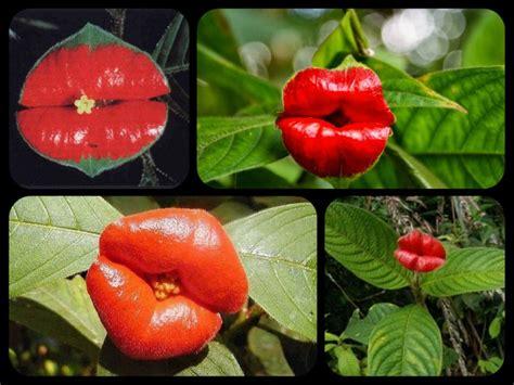 i fiori i fiori pi 195 謦 194 185 belli mondo