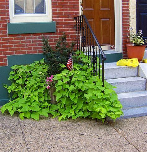 Step Planter by City Side Step Planter S Photo Album