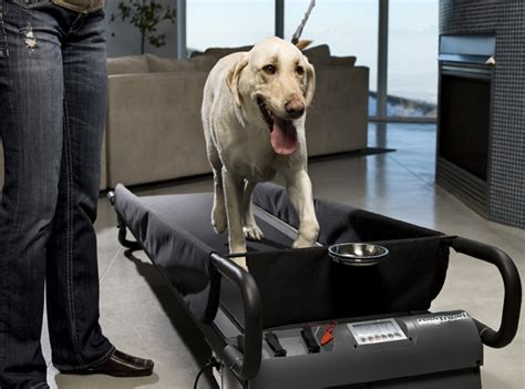 puppy treadmill large treadmill the best choice for large breed canines needing indoor fitness