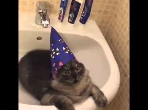 wizard cat wizard of cat