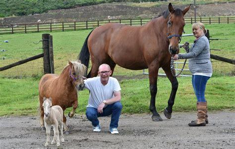 mini pony image gallery mini pony