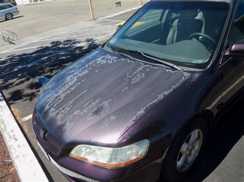 auto collision repair car paint in fremont hayward union city san francisco bay auto painting