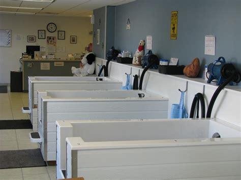 grooming salon 29 best grooming salon ideas images on grooming salon grooming salons