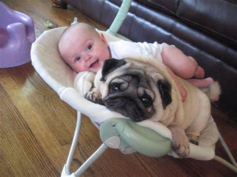 pug child pug is my best friend pics of pugs and together