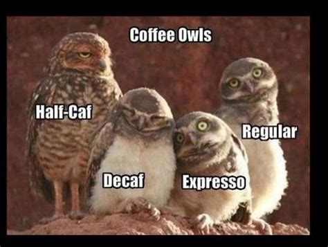 owl coffee new year tales of a grade coffee owls and dr seuss