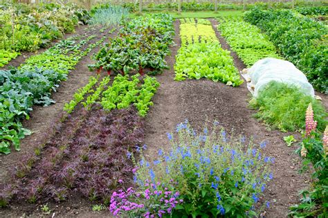 Permaculture Gardening by Permaculture Courses Permaculture Gardening From Seed To