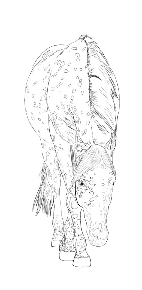 coloring pages of appaloosa horses appaloosa horse line art by stormsdestiny on deviantart