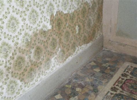 Internal Decoration Bone Dry Damp Proofing Real Expertise For Sorting Out