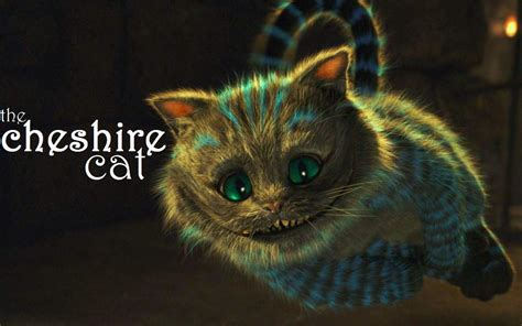 a cat in 2010 in cheshire cat pictures cat pictures