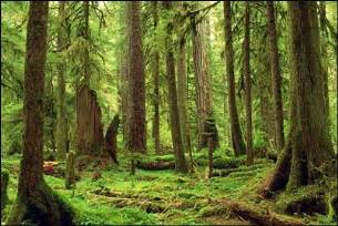 Woods L Forks Washington Our Great American Adventure