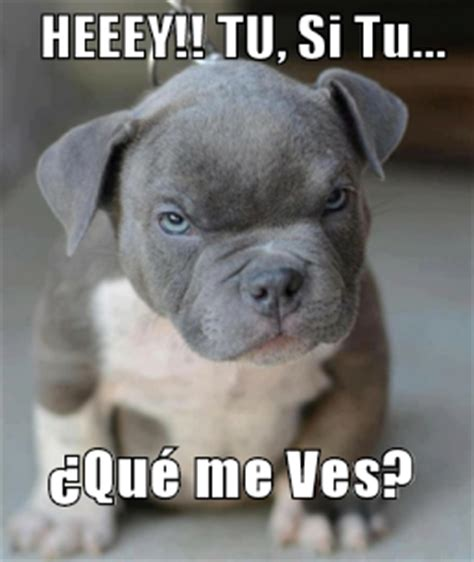 imagenes de amor chistosas con animales memes chistosos de animales imagenes chistosas