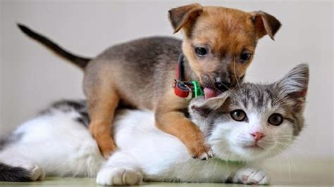 puppies and kittens together animal when dogs and cats in together 2015 animals tv