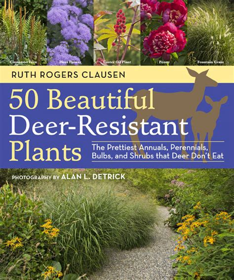 50 beautiful deer resistant plants the prettiest annuals