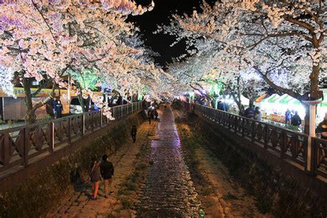 imagenes de paisajes coreanos los cerezos en corea y el festival de jinhae dorito coreano
