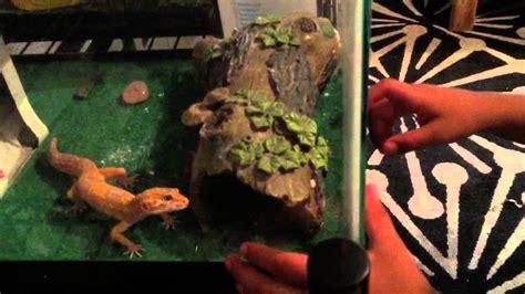 reptile room tour reptile room tour august 2015