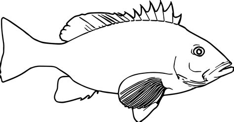 coloring pages of real fish realistic cartoon fish coloring page sheet wecoloringpage