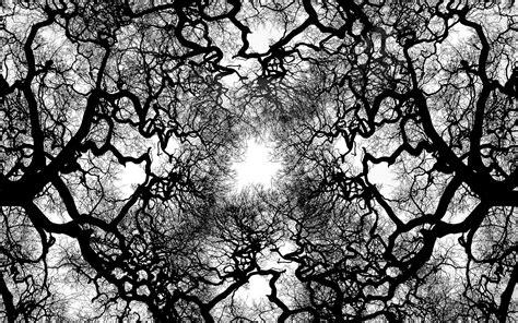 cool tree cool abstract tree abstract cool tree wallpaper chainimage
