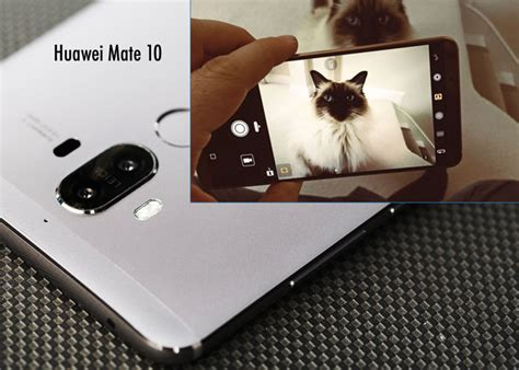 can cats and dogs mate huawei makes a smartphone which can distinguish between cats and dogs